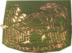 2001 Maze - Rhode Island Red