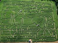 2005 Maze – Horse