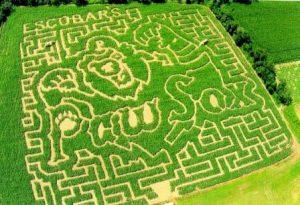 2015 Maze – Paw Sox