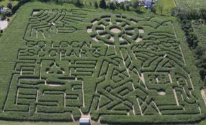 2008 Maze – Go Local